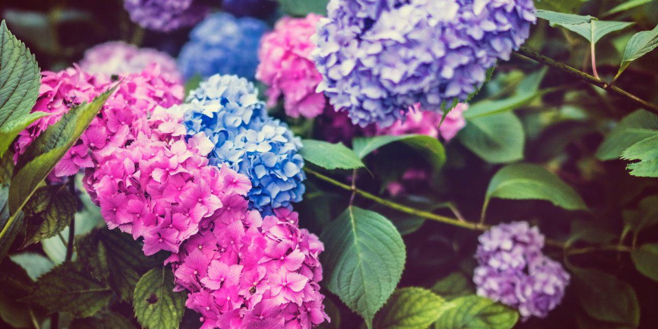 Flowers, a Visual Pleasure for Your Senses